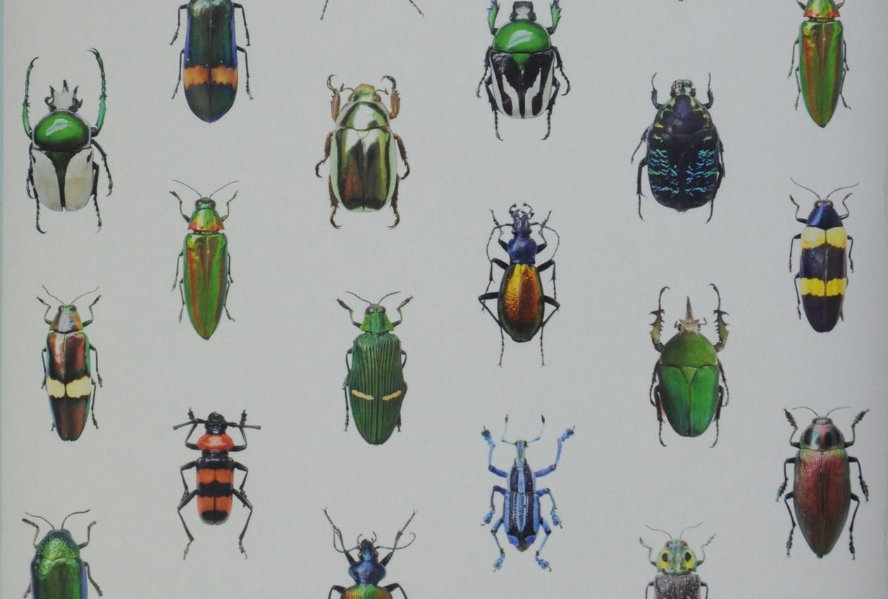 Coleoptera, ref. CCMLE 10219 Curious collection by MariëlleLeenders Design et édition MariëlleLeenders, Eindhoven, Pays-Bas Intissé, impression numérique Inv. 2018.12.2